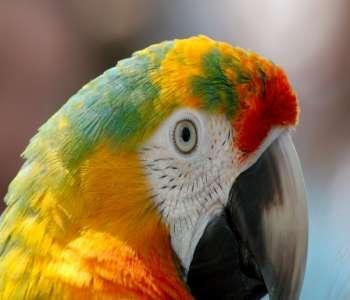 http://upblog.univ-parakou.bj/Histoire de vie : le perroquet